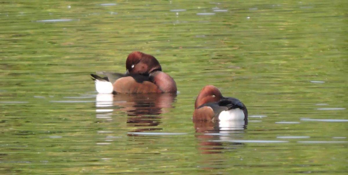 Water birds make a beeline to Assam's wetland 2
