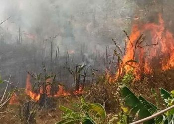 Manipur seeks locals' cooperation to prevent forest fires 2