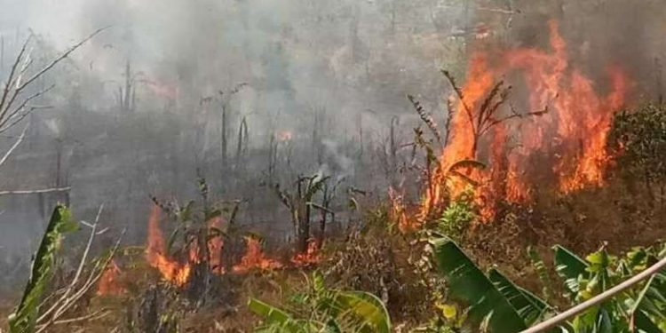 Manipur seeks locals' cooperation to prevent forest fires 1