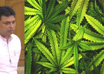 'Drug-free Tripura' sloganeering goes for a toss, State Government to take experts' opinion on ganja cultivation 1