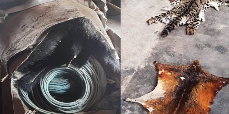 Arunachal: Skins of black bear seized in Dirang 1