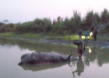 Assam: Poachers kill one-horned rhino in Kaziranga National Park 3