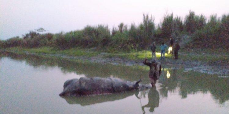 Assam: Poachers kill one-horned rhino in Kaziranga National Park 1