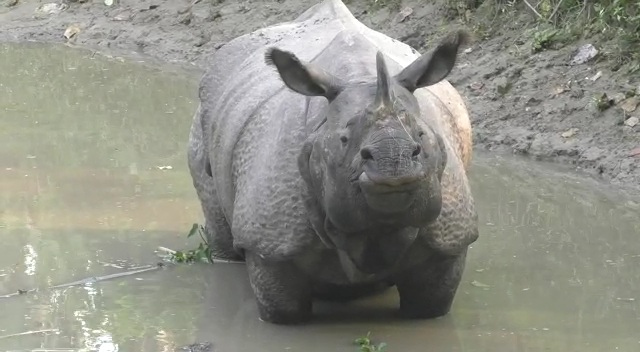 Rhino of Orang National Park