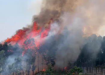 Sikkim: Devastating forest fire breaks out at Tingley in South district 1