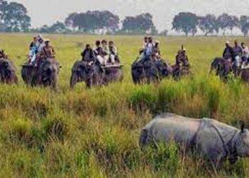 Assam: Kaziranga National Park to close elephant safaris from April 30 2
