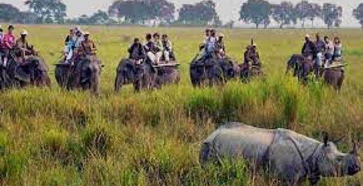 Assam: Kaziranga National Park to close elephant safaris from April 30 1