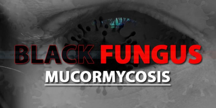 Fight against black fungus: 50 vials of Amphotericin-B drugs dispatched to Assam and Tripura 1