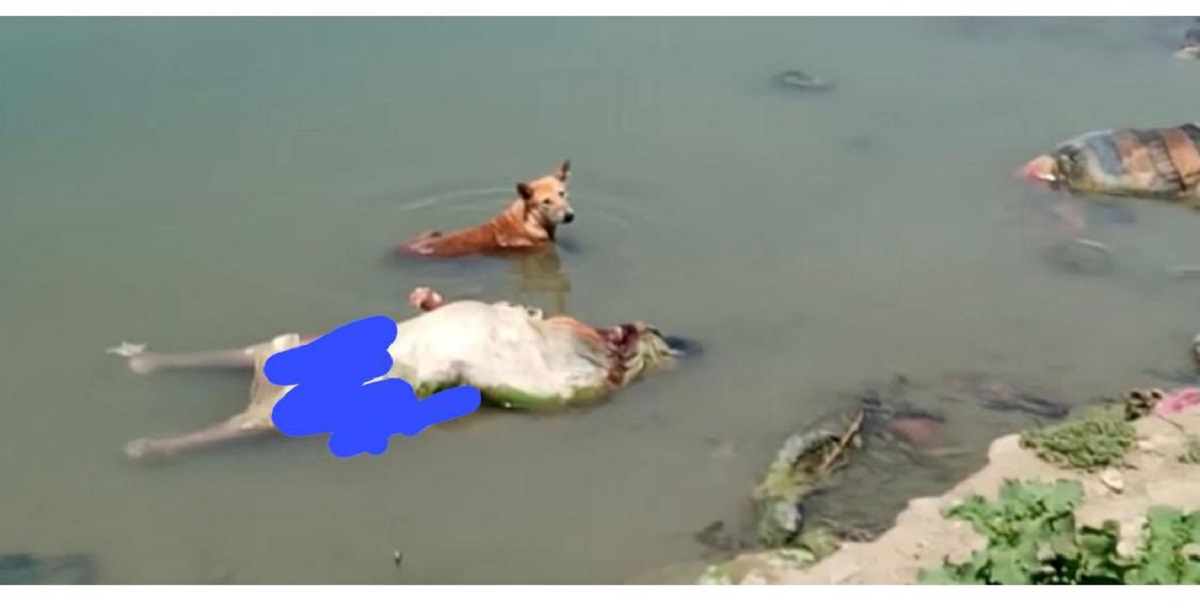 Dozens of suspected COVID-19 corpses found in Ganges river