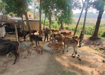 BSF seizes cattle heads along Indo-Bangla border
