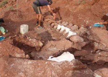 100 million years old dinosaur bones discovered in Meghalaya 1