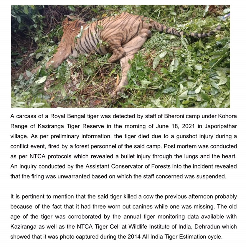 Assam: Unwarranted firing killed tiger on June 18, clarify Kaziranga National Park authorities 5