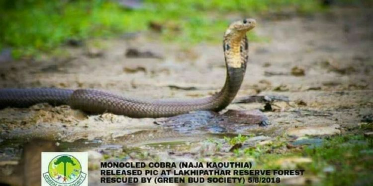 'Snakes conservation important to maintain balanced eco-system' 1