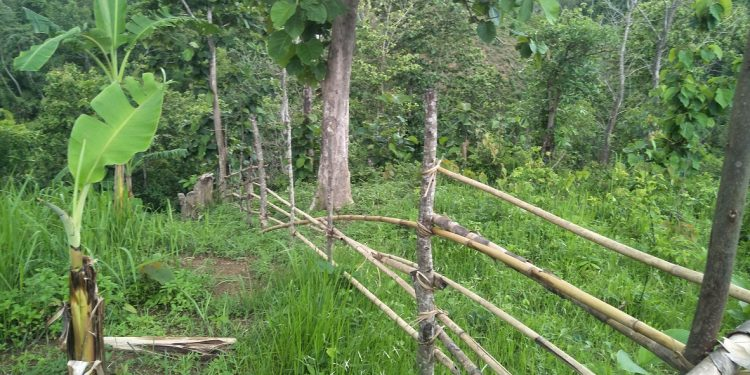 Alleged Mizo miscreants have allegedly started chopping trees and sowing betel nut seeds.