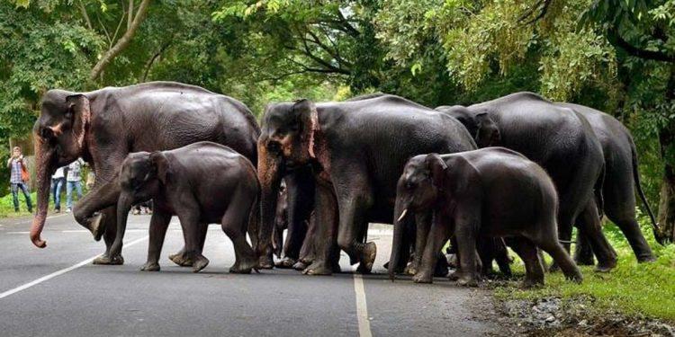 elephants corridor