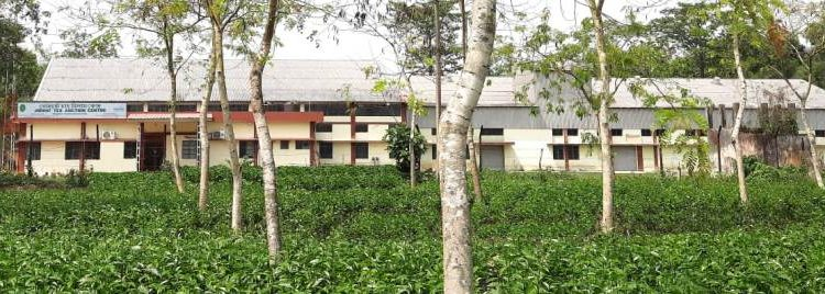 Assam: First International Tea Day special auction at Jorhat fetches record prices 1