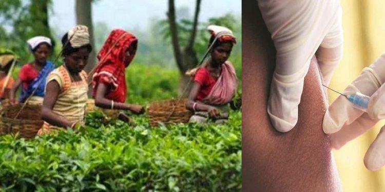 tea garden workers Covid19 vaccine