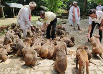 Assam: Monkeys at Mayamora shrine facing starvation amid Covid lockdown, locals join hands to feed them 1