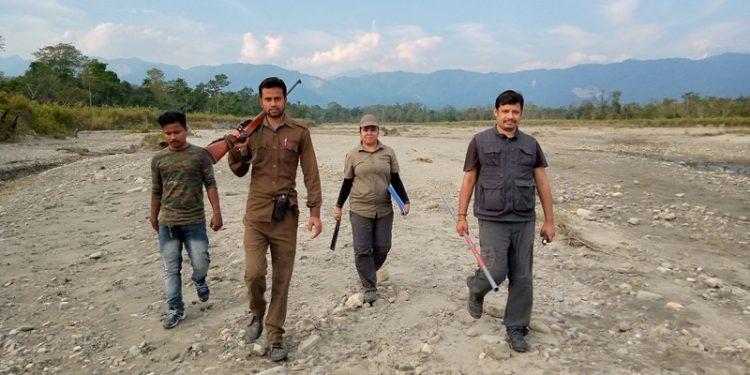 Assam: Tiger population in Manas National Park jumps to 48 1