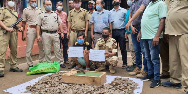 Assam: 10 Geckos, 10 kg of Pangolin skin recovered in Karbi Anglong; two arrested 1
