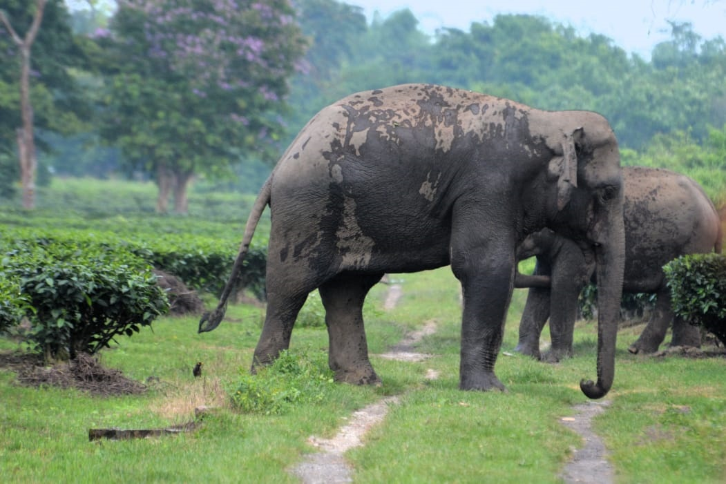 Hundreds of casualties on both sides in world capital of human-elephant conflict 6