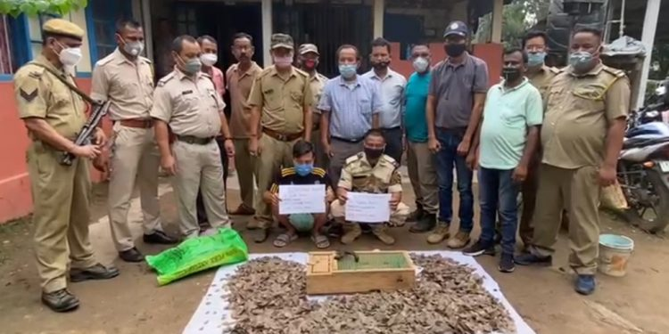 Assam: Nagaland IRBN personnel held with Tokay Gecko, pangolin scales in Bokajan 1