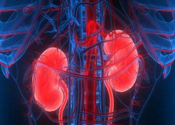 Kidney racket