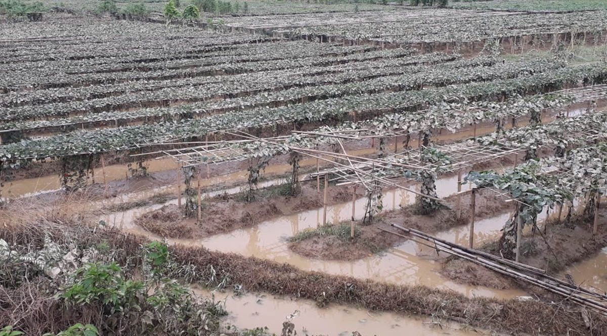 Heavy rainfalls hit Tripura; 21 relief camps opened for 2,137 people 4