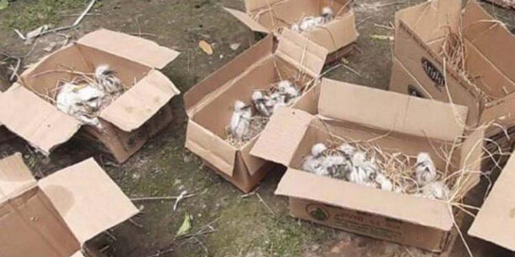 Assam: Three Tangla Municipal Board officials arrested in over 200 cattle egrets death case 1