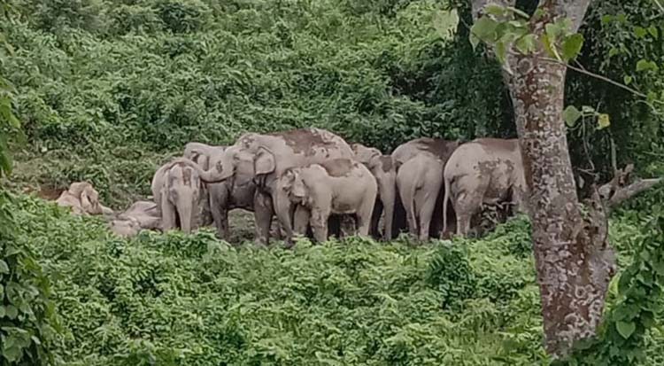 Hundreds of casualties on both sides in world capital of human-elephant conflict 7