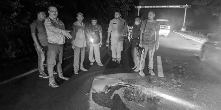 Assam: Speeding vehicle kills hog deer in Kaziranga, KNP authorities urge people to 'drive slow, act responsibly' 1