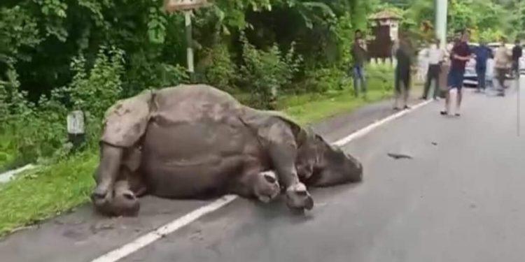 Assam: Rhino injured in road accident in Kaziranga National Park 1