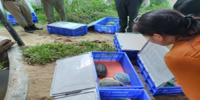 63 endangered turtles rescued in Pune brought to Assam state zoo in Guwahati 1