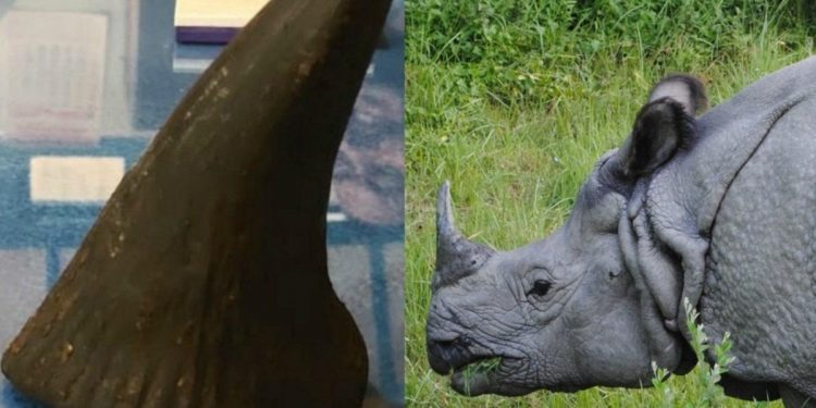 Assam: Nearly 2500 rhino horns to be destroyed 1