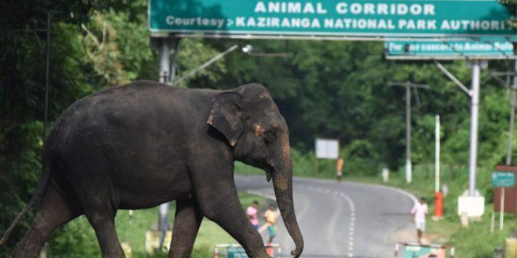 Assam: KNP authorities start issuing time cards to regulate traffic in animal corridors in Kaziranga 1