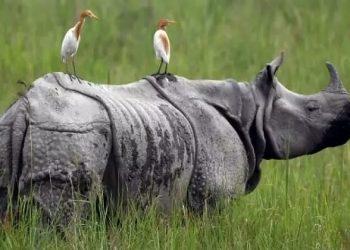 World Rhino Day and Burning of Rhino horns in Assam 4