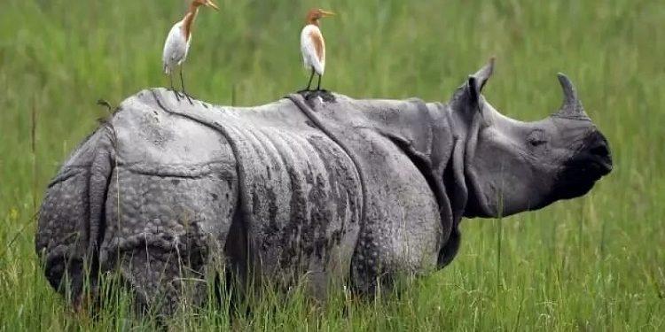 World Rhino Day and Burning of Rhino horns in Assam 1