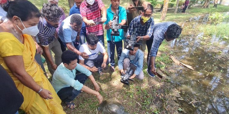WTI releases turtle