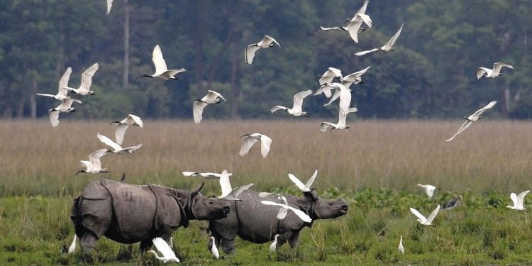 Pobitora Wildlife Sanctuary in Assam to re-open for tourists from tomorrow 1